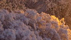 IMG_4349 (Mr Thinktank) Tags: raureif frost