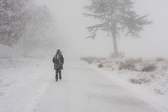 Blizzard (MickyB1949) Tags: bradgatepark leicestershire snow blizzard weather winter badweather people white 2018 winterlandscape