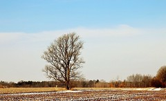 Elegant Pride (Haytham M.) Tags: outdoor trees plant blue sky snow winter day january cold elegant countryside country field