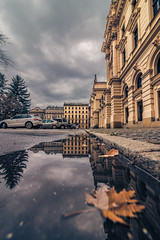 After the rain (Vagelis Pikoulas) Tags: rain reflection reflections leaf krakow old town city cityscape urban vertical poland europe travel canon 6d tokina 1628mm landscape view november autumn 2017