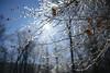 Ice Storm [02.08.18] (Andrew H Wagner | AHWagner Photo) Tags: 5dmk3 5d3 5dmkiii 5dmarkiii 5dmark3 canon eos 35l 35mm f14 f14l winter snow ice cunninghamfalls cunninghamfallsstatepark thurmont maryland frozen md bokeh dof nature outdoors explore exploration exploring hiking