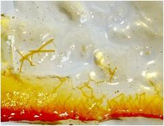 Marmalade ! (jesse1dog) Tags: marmalade seville orange 2017 january citrus macromondays gm1 jupiter9 peel bubbles extensiontube