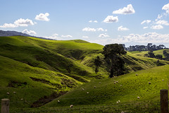 Rolling Hills (PJ Reading) Tags: newzealand nz hill hills rollinghills picture picturesque landscape nature natural hobbiton farm farmland middleearth hobbit lordoftherings afternoon view peaceful peace tranquil tranquility