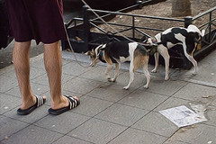 1343_0701FLOP (davidben33) Tags: quotwashington square parkquot wsp unionsquare unionsquareprkpeople women beauty cityscape portraits street quot 14 photosquot quotnew yorkquot manhattan