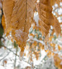 The Icy Leaves Of March (John Kocijanski) Tags: leaves trees ice snow macro bokeh winter nature canong15 hbw
