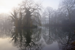Weeping Willow on a misty winter Morning at sunrise - Dordrecht 2018 (Wilma v H-Thankfull for all your lovely comments a) Tags: 2018 winterscenics winter fog foggy mist misty weepingwillow treurwilg trees silhouetttes essenhofcemetery begraafplaatsdeessenhof ponds lakes reflections plants dordrecht nederland netherlands zuidholland sunrise luminositymasks tkactionsv5v6panel canoneos60d outdoors