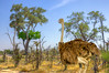don't build a nest there... (PhilHydePhotos) Tags: africa botswana chitabecamp okavangodelta safari ostrich animalplanet