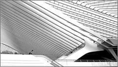 Gare des Guillemins, Liège, Belgium (claude lina) Tags: claudelina belgium belgique belgïe provincedeliège liège ville town architecture gare station garedesguillemins santiagocalatrava noiretblanc black white monochrome