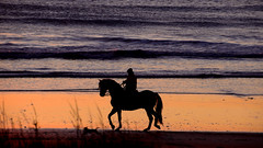 Rider and dog (Raquel Borrrero) Tags: horse backlighting rider sea sunset nikon d3200 light playa beach olas océano mar animal caballo perro jinete agua arena sand contraluz