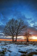 Winter sunset (Nebelski) Tags: tree nature winter snow sunset sky outdoors season landscape dusk frost blue scenics coldtemperature branch beautyinnature weather cloudsky sun sunlight
