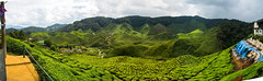 cameron highlands (Miky Mazz) Tags: the piantagione malesia cameron highlands
