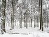 Winterwald (kaundut) Tags: winterwald hohes venn