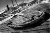 Rusty Anchor (King Grecko) Tags: anchor bw metal black blackandwhite boat contrast corrosion nautical rust sailing texture weight white