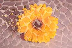 flowers-plants 17-02-2018 002 (swissnature3) Tags: macro flowers plants light