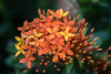 Balinese flower (alain01789) Tags: fleur velvia flower exotic nature plant