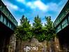 The Three Tree Bridges (Steve Taylor (Photography)) Tags: bridge snokoh architecture fence railing wall green brown blue brick uk gb england greatbritain unitedkingdom margate tree trees ivy railway cloud sky tag graffiti