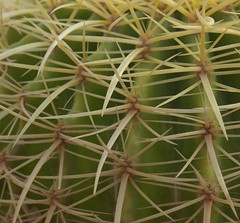 Cactus Macro (jimbobphoto) Tags: plant mexico danger spines hurts