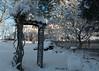 Backyard Fence (Bruce Livingston) Tags: hff fujix100f sunrise earlymorning backyard trees fence snow trellis explore