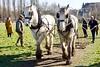 Shire Horses and Harrow (Nexus Nine Photography) Tags: shirehorse parliamenthill harrow