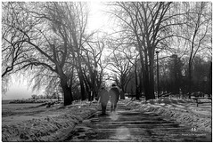 FEBRUARY 2018 NGM_7289_3931-1-222 (Nick and Karen Munroe) Tags: couple walking walk sun sunlight snow snowy winter wintertrees winterwonderland wintry wintery canada beauty beautiful brilliant blackandwhite bw blackwhite bandw munroedesignsphotography munroedesigns munroephotography munroe nikon nickmunroe nickandkarenmunroe nikon2470f28 nickandkaren nick monochrome mono lovely lovers love karenick23 karenick karenandnickmunroe karenmunroe karenandnick karen landscape lakeshore lakefront jackdarlingpark mississauga ontario outdoors ontariocanada nikond750 d750 2470 2470f28 afs2470f28edg