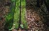 moss (luciferslunarresort) Tags: green fuji color fujifilm superia400 35mm minolta superia xtra 400 x570 himatic af2
