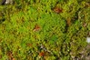 Forest moss (Steve4343) Tags: steve4343 nikon d70 appalachian trail cherokee national forest red green blue yellow orange white clouds sky beautiful tennessee autumn beauty johnson county lake watauga cloud colorful woods garden gardens happy leaves rocks wildlife landscape mountain tree trees grass water wood moss floor