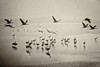 Hula (mirsavio) Tags: israel landscape nature fujifilmxt hula reserve cranes birds mist