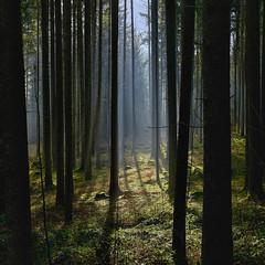 Magisches Leuchten im Wald (Helmut Reichelt) Tags: leuchten magisch dunst morgen sonne winter januar schwaigwall geretsried bayern bavaria deutschland germany leica leicam typ240 captureone11 hdrefexpro2 fhdr leicasummilux50mmf14asph crop