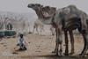الصمت فى حضور الملوك (photo power2020) Tags: برقاش طبيعة جمال الجيزة نيكون مصر سوق صور صحراء