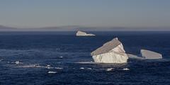 'Bergs (stephgallant) Tags: ice iceberg berg atlantic atlanticocean ocean water sunset blue nl newfoundland stjohns signalhill canon60d canon canoneos avalon landscape oceanscape sea 55250mm telephoto canada summer