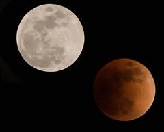 super to eclipse (H.H. Mahal Alysheba) Tags: moon eclipse lunareclipse night lumix gx7 olympus mzuiko 40150mmf28