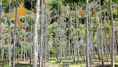 Tarapoto Natura Viva (84) (Beadmanhere) Tags: tarapoto peru infrared