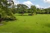 J3. Polonnaruwa - Macaque à toque (Darth Jipsu) Tags: grass unesco wild toquemacaque tree ceylon cholas ceylan forest srilanka wildlife ape toque animal polonnaruwa northcentralprovince lk