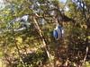 G0121271 (harleyhurricane1) Tags: line zip zipline ziplinepark dadecityflorida treehoppers centralflorida largestziplineparkincentralfl dadecity
