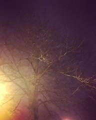 49/365. In mist (Surfchild.) Tags: 365the2018edition 3652018 day49365 18feb18 mist redruth instagram
