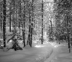 IMGP1575.jpg (LinnBJ) Tags: norway østmarka skog forest væroghimmel landscapes norge landskap vinter nature snø steder natur oslo places weather winter