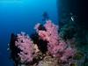 23022018-_1240253 (chevalbenjamin) Tags: philippines visayas bohol underwaterphotography underwater scubadiving dive plongéesousmarine corals plongée seaocean nature