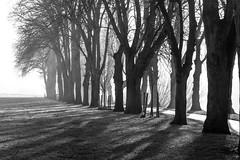 Foggy morning (Macro light) Tags: light trees shadows sunlight fog worcester racecourse blackandwhite
