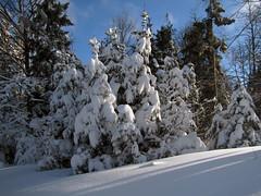 Zimska idila / Winter idyll (Damijan P.) Tags: zima winter sneg snow pohorje trijekralji slovenija slovenia prosenak