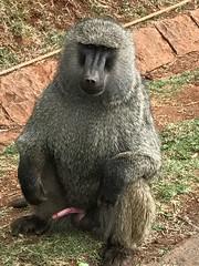 NBO-0561 (jlizaso2) Tags: africa cisco kenya nairobi nairobinationalpark nairobicounty