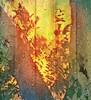 (Photosintheattic (Devy)) Tags: weatherd time tobeornottobe raindrops wood trees life daysofourlives shadows flickr dew peeling bark change fairweatherfriend throughthetrees overtheriverandthroughthewoods