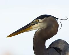 D72_0743 (mcpiano1) Tags: floride2018 oiseaux