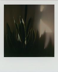 untitled (kaumpphoto) Tags: polaroid 680 instant plant houseplant shadow point dark edge beige