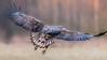Sea Eagles Back (eric-d at gmx.net) Tags: seaeagle seeadler adler eagle eric wildlife birdofprey ngc