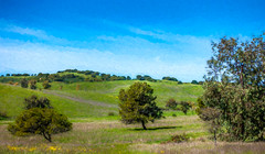 Santa Teresa County Park Impressionist Digital Painting (randyherring) Tags: santateresacountypark sanjose california impressionist hills landscape nature park trees rural countryside grass green sunny scenery outdoors verdant recreation hiking walking land protected trail scenic countypark californiahiking californiahills tree outdoor bluesky hill natural