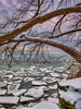 Frozen Flocks Luminar2018 (KWPashuk) Tags: samsung galaxy s8 s8plus lightroom luminar luminar2018 kwpashuk kevinpashuk outdoors nature flock geese swans snow winter ice lake evening clouds oakville ontario canada shore shoreline
