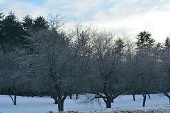 2018_0124Third-Ice-Storm0002 (maineman152 (Lou)) Tags: winter winterweather badweather ice icestorm icecovered nature naturephoto naturephotography january maine