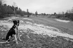 Come on (mripp) Tags: art vintage retro old dog dogs hund hunted animal animals landscape black white mono monochrome pet bavaria leica q