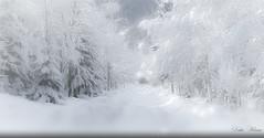 Ambiance ouatée (Didier HEROUX) Tags: neige snow hiver winter janvier saison 74 flickr alpes alpi alpen alps 2018 route arbre tree sapin forêt didierheroux herouxdidier hautesavoie montagnes mountains paysage landscape flocon blanc alpesdunord auvergnerhônealpes france french région froid ambiance ouate balade randonnée rando silence brume fog promenade le