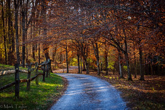 Autumn Country Road (*Ranger*) Tags: nikond3300 road autumn forest outdoors travel fence landscape tennessee usa arboretum woodland